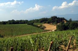 La vigna Rossinello a Campolucci